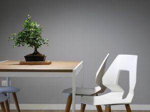 6 växter som renar hemmet och lyfter inredningen